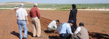 Cropping systems in Northern Iraq
