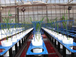 PBRC Research Plant Phenotyping