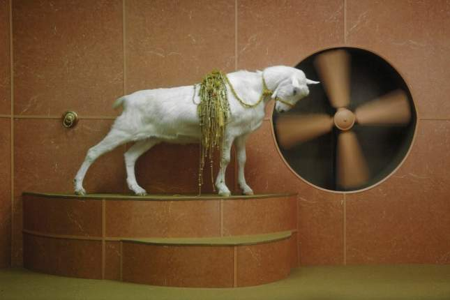 Image: Hayden FOWLER, Goat Odyssey I (video still), 2006