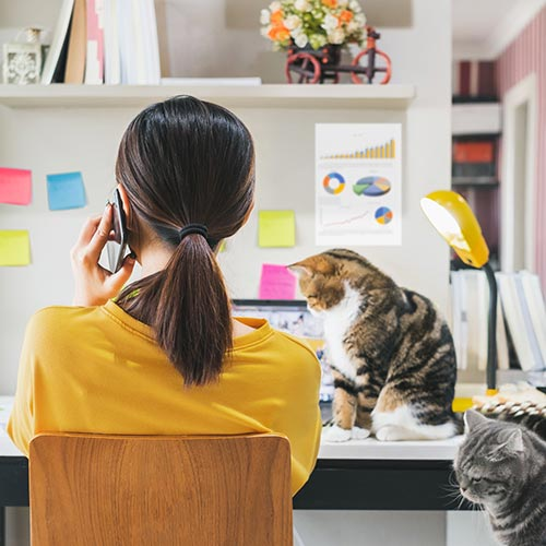 work-from-young woman working from home with a cat on her lap.jpg